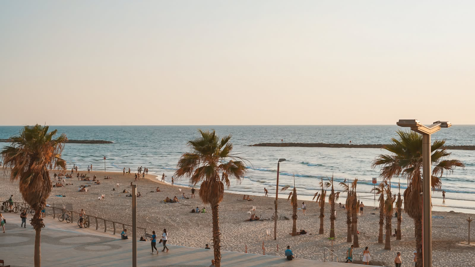 Beach and palm trees in Tel aviv