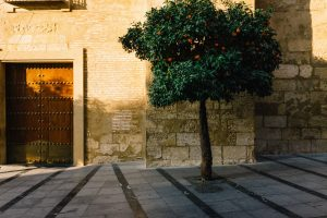 orange tree in seville